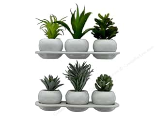 Darice Succulent Potted Assorted 6 in. Green (2 sets)