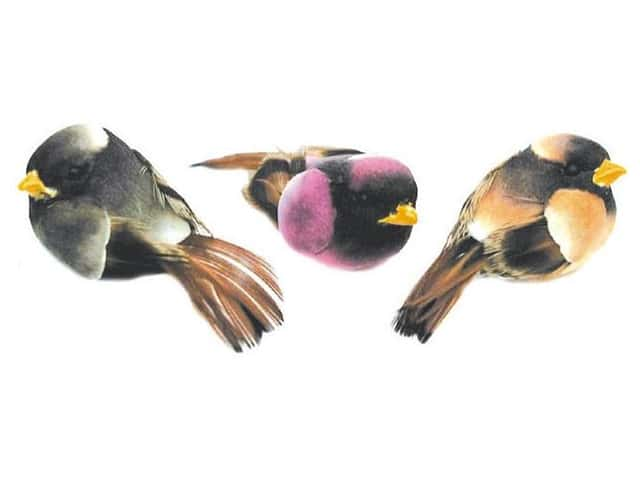 Accent Design Artificial Bird 1 1/4 in. Asst Grey/Brown/Purple Feather 3 pc.