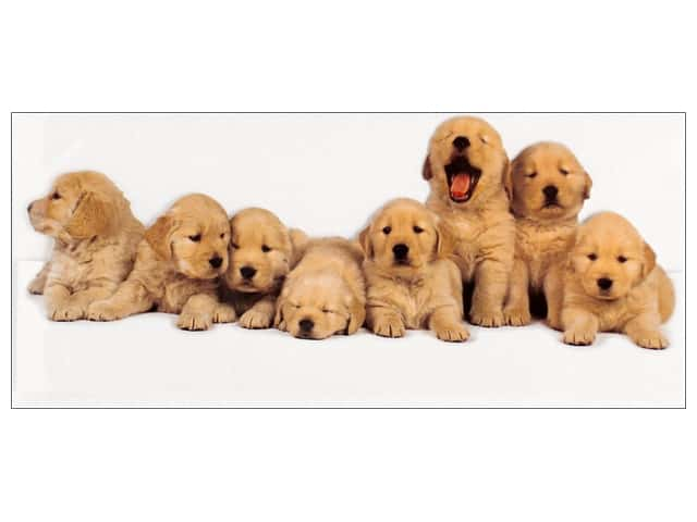 Paper House Die Cut Blank Card Golden Retriever Puppies