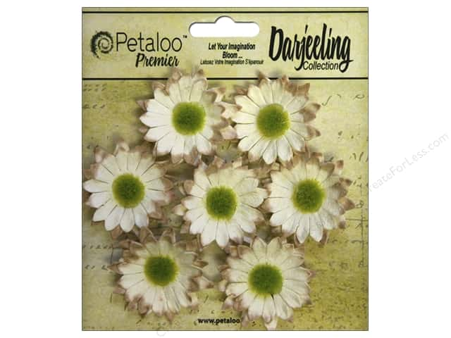 Petaloo Darjeeling Daisy Mini Cream